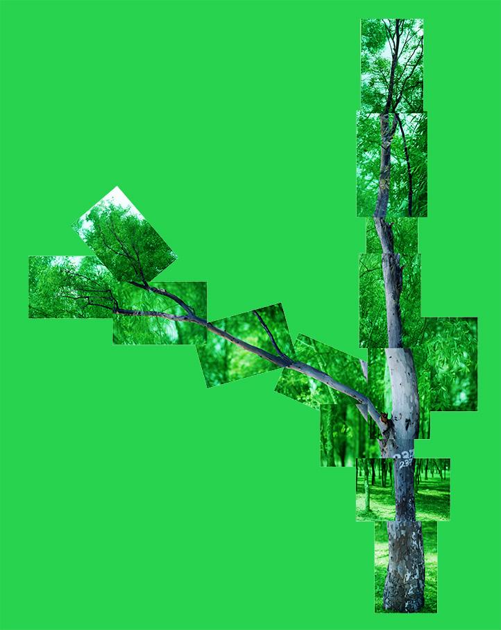 tree-SalvadorColin