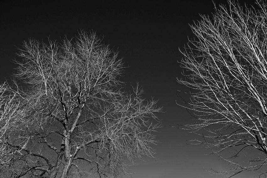 arboles-SalvadorColin